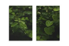 Greens after rain. 15 images BUNDLE Product Image 3