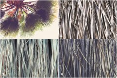 11 Palm Leaves Textures Product Image 2