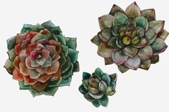 Succulents and Cacti Watercolor Clip Art Set Product Image 2