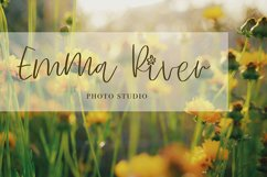 Sunflower Product Image 4
