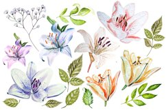 Hand Drawn watercolor flowers lily Product Image 3