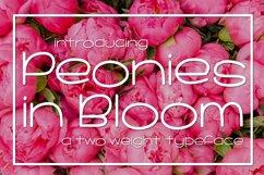 Peonies in Bloom Product Image 1