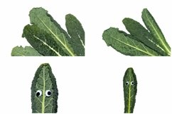 Kale Cabbage Vegetable Photograph Collection Product Image 3
