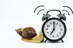 Funny snail Achatina Product Image 1