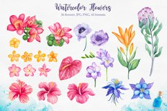 Tropical. Watercolor illustrations. Product Image 4
