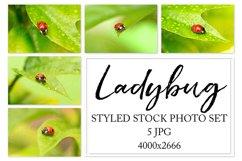 Ladybug. Styled stock photo set. Product Image 1