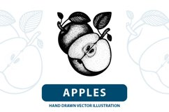 Apples hand drawn vector illustration. Product Image 1