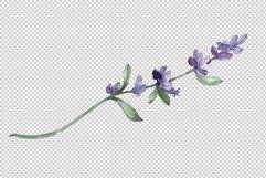Bouquet summer breeze lavender watercolor png Product Image 5