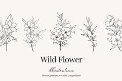 Wildflower botanical illustrations Product Image 1