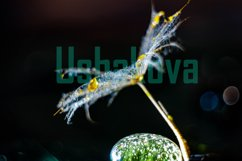 A parachute from a dandelion on a stone. Yellow drops. Macro Product Image 1