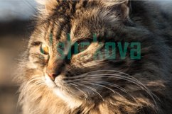 Fluffy domestic cat Product Image 1