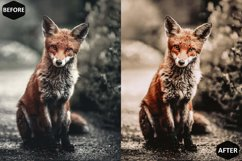 Pumpkin Photoshop Actions And ACR Presets, Fall preset Product Image 5
