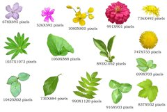 15 summer plant elements PNG Product Image 2