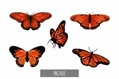 Beautiful Orange Butterfly Clipart Product Image 1