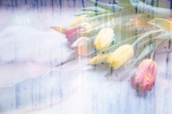 tulips and water drops Product Image 1