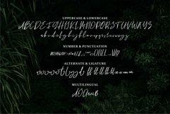 Web Font Bhayden - A Beauty Script Font Product Image 4