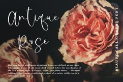 Brightlight - Beauty Calligraphy Font Product Image 6