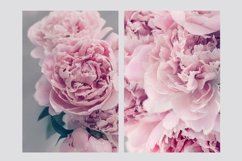 Pink Peonies Collection Product Image 5