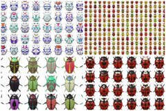 10 Beetle Collection Backgrounds Product Image 3