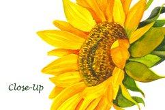 Sunflower Watercolor Clipart. Summer boho flower, bird Product Image 6
