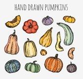 Pumpkins set Product Image 3