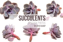 Succulent Plants Isolated Photo Bundle Product Image 1