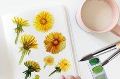 Summer Dandelion Clipart Watercolor  Product Image 2