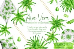 Aloe Vera Clipart. Watercolor Succulent PNG Collection Product Image 1