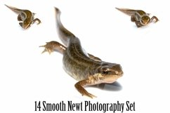 Smooth Newt 14 Photographs in Different Angles JPG Product Image 1