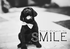 Cats and Dogs - A Cute Handwritten Font Product Image 5