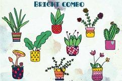 House Plants Color, Cactus, Flower Pot, Hanging Indoor Plant Product Image 4