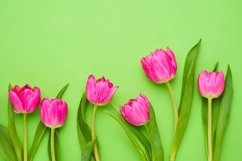 Border of bright pink tulips on green background. Product Image 1