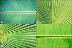 11 Palm Leaves Textures Product Image 4