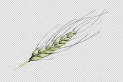 Spike of wheat Watercolor png Product Image 4