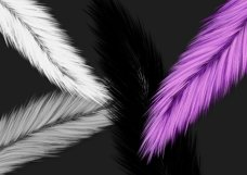 Fuzzy Feathers PNG Product Image 2