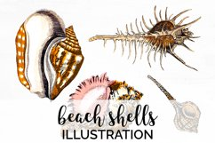 Shells Clipart Animals Beach Product Image 1