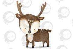 Baby Woodland   5 animal illustrations   PNG/JPEG clip art Product Image 2