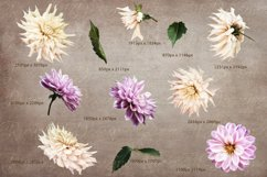 Dahlias clipart. Bouquets of white and purple flowers. Product Image 2