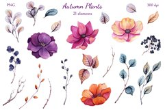 Autumn Plants Product Image 2