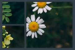 Instagram Photo Pack - Flora Vol. 1 Product Image 5