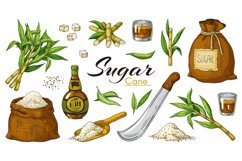 Hand drawn sugarcane and rum. Colored vintage alcoholic beve Product Image 1