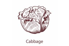 Cabbage icon. Detailed organic vegetarian product sketch, co Product Image 1