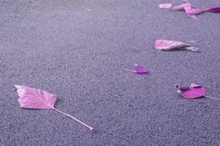Pink autumn leaves on textured abstract surface. Product Image 1