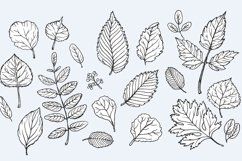 Vector Autumn Leaves Product Image 3