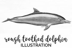 Dolphin Clipart Product Image 1