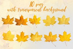 Maple leaves. JPG PNG. Product Image 3