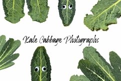 Kale Cabbage Photograph Collection Squeeb Creative