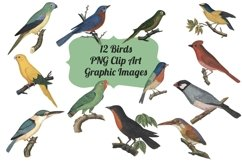 12 Vintage Birds Transparent Clipart Images Product Image 1