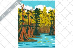 Baldcypress Tree Growing in Apalachico National Forest WPA Product Image 1