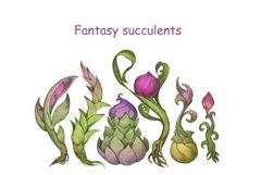 Fantasy succulents Product Image 1